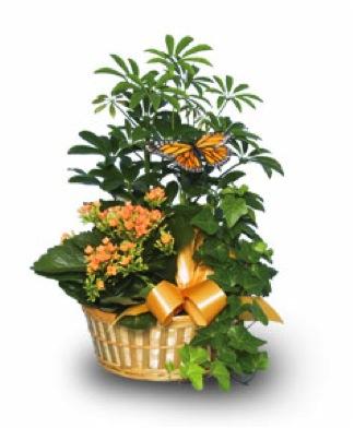 Assorted Planter Basket